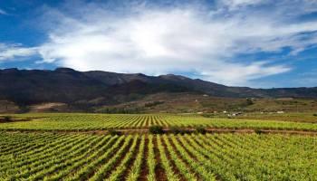 winery vip celebrity